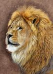 Lion - the King by sschukina