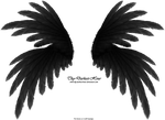 Frilled Wings - Black by Thy-Darkest-Hour