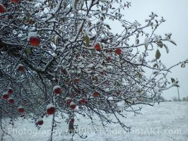 Winter in my orchard by mel90212