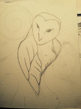 WIP - The Gaze of a Barn Owl by janewillow1