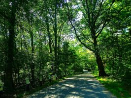 Green Forest Road by brittanyfay