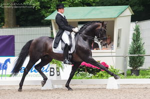 Dressage - III by Summerly