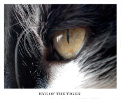 Eye Of The Tiger by chakram