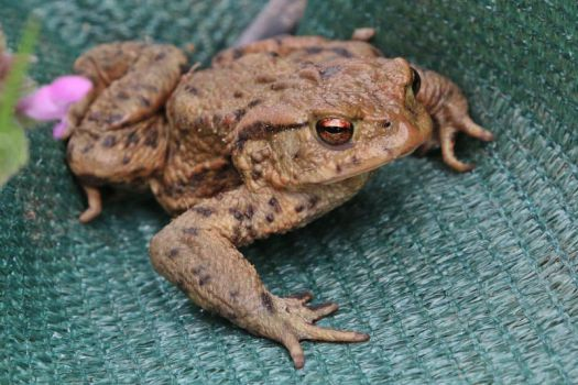 Toad Stock by Malleni-Stock