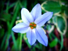 six petals.. by lily314