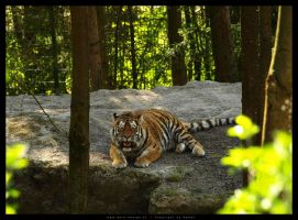 Tiger2 by DaSef