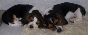 My two new puppies sleeping by Sweetgirl333