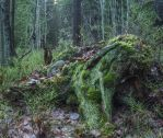Moss-covered stump by Zds0