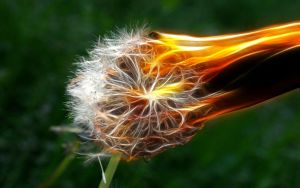Dandelion Flambe by MindStep