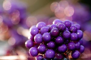 BeautyBerry by thrumyeye
