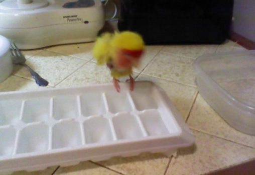 Jo Jo's Ice Tray Bath by JRigh