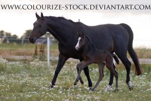 Mare and Foal Stock 1 by Colourize-Stock