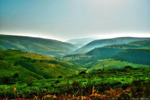 Over The Hills by amir-malka