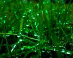 Emerald Rain II by NovaMcKnighten
