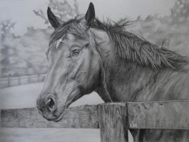 Merlin- Drawing by rainyrose23