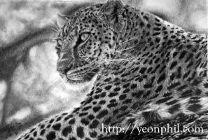 leopard drawing by sharppower