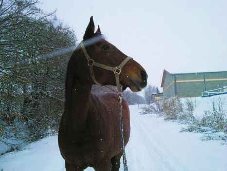Snow-Horse by Clayar