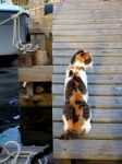 Saltwater Cat - Re-size for featured deviation by Astridyl