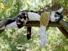 Calico cat fursuit by pariahpoet