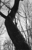 The Crooked Tree by callsign-oldman