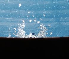 Ice on a window by BiancaEnache