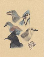 Jaybirds' Call by EagleFlyte