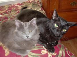 My Favorite Photo Of My Two Cats by Millerkatrina28
