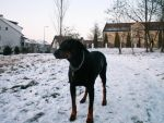 Silba in snow by Lola-in-the-Black