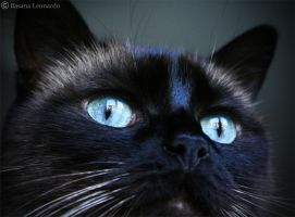 Glacial eyes by Leox90