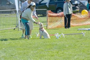 2014 Dog Festival, Try and Train 4 by Miss-Tbones