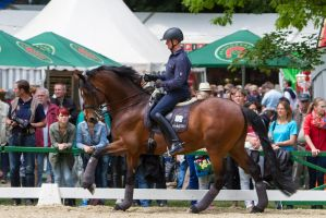 Bay Warmblood Cantering by LuDa-Stock