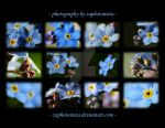 Forget-Me-Nots Calendar - Back Cover by zaphotonista