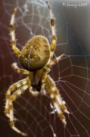 Spider by Slinky-2012