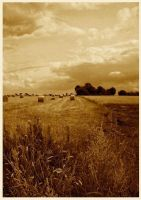 Harvest by Forestina-Fotos
