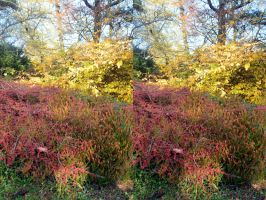 The Sterescopic Autumnal Cotoneaster Experience by aegiandyad