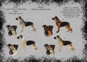 CLOSED - National titled GSD pups by Maranez