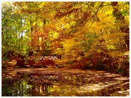 New England Fall by lefury
