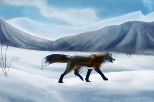 Fox by Silvadruid