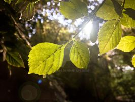 Some pretty leaves. by kath660