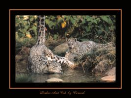 Mother And Cub by caracal