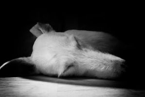 Sleeping Dog by Bazz-photography