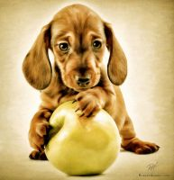 Puppy with an apple by comy1982