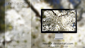 White plant wallpapers pack by nepst3r