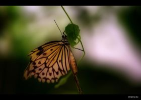 Butterfly by p0isson