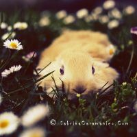 Rabbit by sabbbriCA