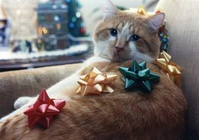 Christmas Cat by MrE1967
