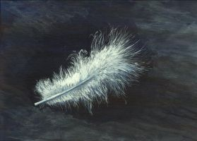 Small Feather by h-i-l-e-x