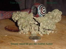 Smoke Weed Till You DIE by idragonz