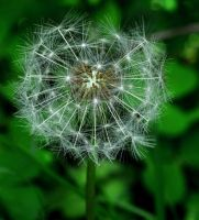 Make A Wish by Forestina-Fotos