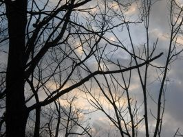 The Branches by Epiphone14